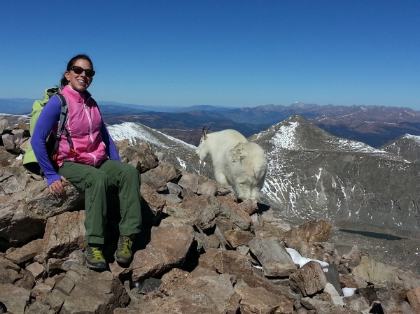 Mountain Goats on Quandary Peak